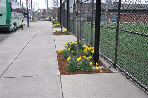 boston parks tree guards for tree beds tree boxes tree pits tree basin