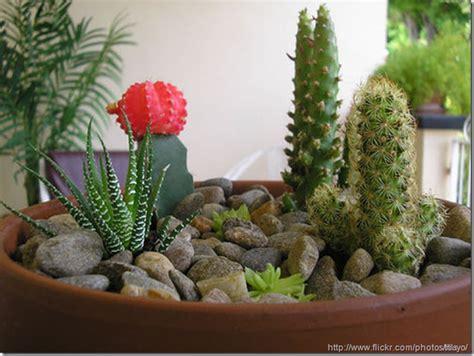 Succulent Dish Garden Ideas Potted Cactus Garden Www Pixshark Images Galleries With A Bite