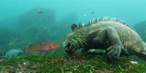 dive galapagos pin diving the galapagos islands on