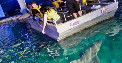 glass bottom boat experience glass bottom boat tour sea life sydney aquarium