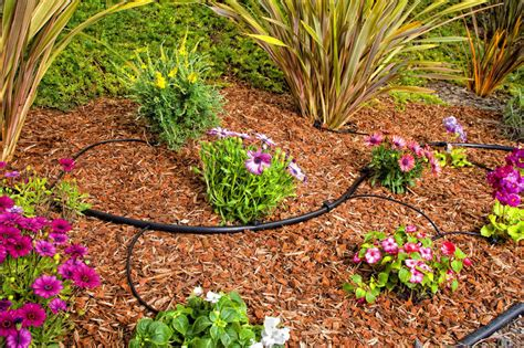 flower bed watering system protect your plants with a drip irrigation kit garden club