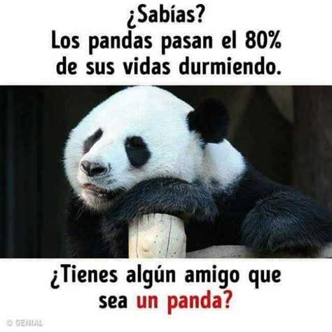 dopl3r com memes 161 sab 237 as l los pandas pasan el 80