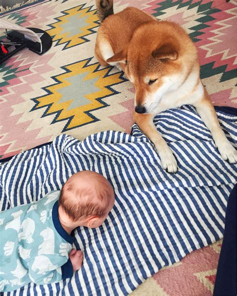 how to introduce a puppy to an how to introduce to baby the fox she modern motherhood