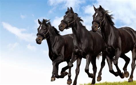 wallpaper hd black horse 25 hd wallpapers horse wallpaper black horses running the