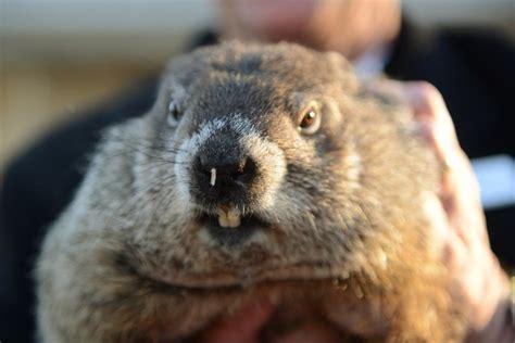 groundhog day trope groundhog day