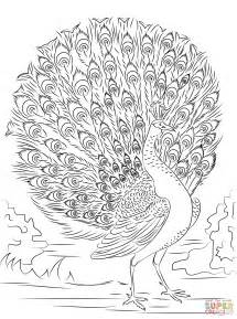 printable coloring pages advanced 1000 images about oiseau on coloring pages