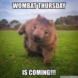 Thursday Memes 18 - wombat thursday
