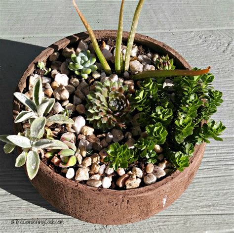 succulent planters rustic succulent planters these plants can really take the heat