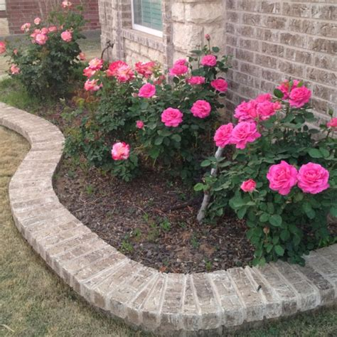 lauren wants pink rose bushes in the front yard for the