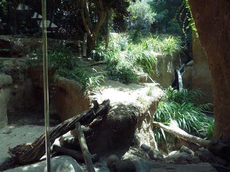 san diego zoo lights malayan tiger exhibit 187 san diego zoo gallery zoo