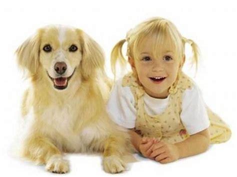 il labrador un da appartamento migliori cani da appartamento come scegliere la razza