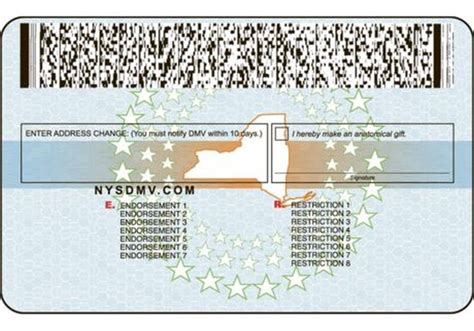 nyc tattoo license renewal evolution of the new york driver s license others
