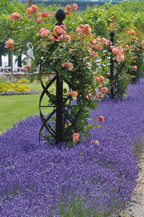 ideas for climbing rose supports classic climbing supports for vintage displays classic garden elements