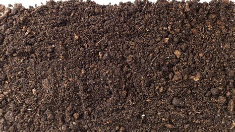 what causes potting soil to grow mold reference com