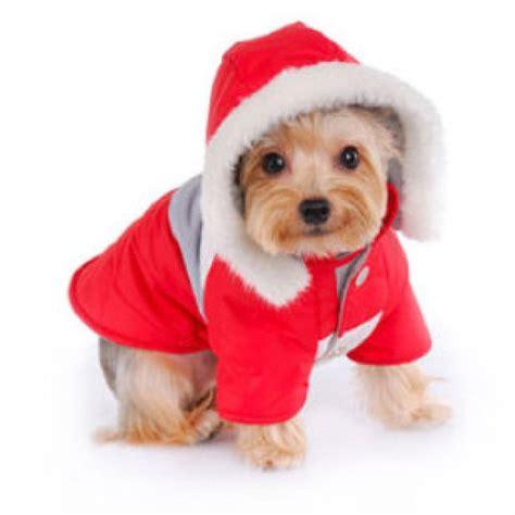 imagenes feliz navidad con perros imagenes tiernas de perritos para navidad imagenes de perros