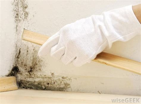 how to remove mildew smell from basement how can i get rid of mildew odor with pictures for