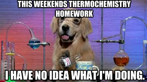 Accountant Dog Meme - this weekends thermochemistry homework i have no idea what