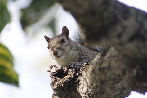 how to get rid of squirrels in the backyard how to get rid of squirrels in the backyard 28 images