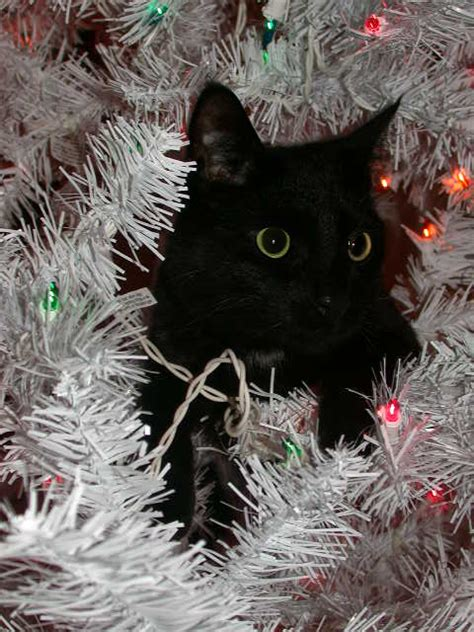 rightbrain leftbrain black cat in a white tree