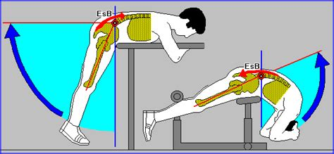 rinforzare pavimento pelvico esercizi per rinforzare il pavimento pelvico quotes