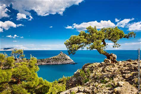high quality royalty free stock photos royalty free images tree and sea high quality stock photos crimea high