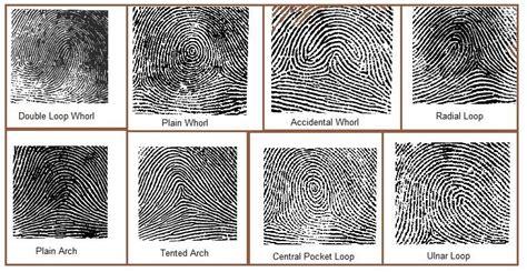 pattern types of fingerprints forensics types of fingerprints