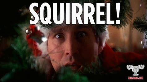 christmas vacation squirrel quote squirrel christmas vacation quote classic  christmas