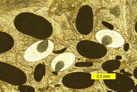 ooids thin section wooster s pseudofossils of the week artifacts in thin