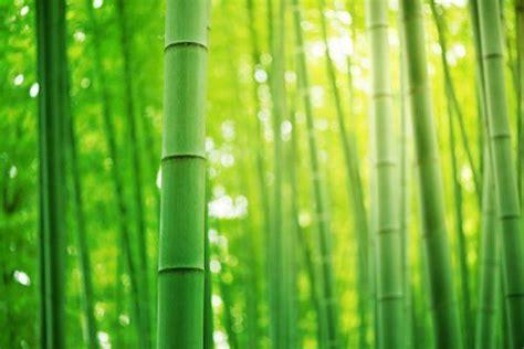 arredamento bamboo tappeti in bamboo per arredare