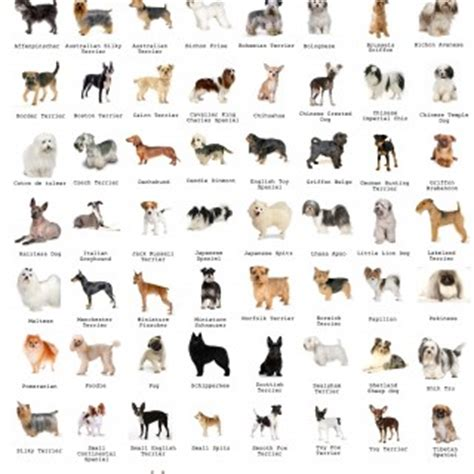 small breeds chart small breeds pictures and names chart breed chart with names hdb approved