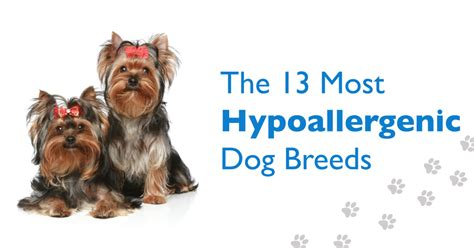 low dander dogs hypoallergenic or low dander breeds are most commonly breeds picture