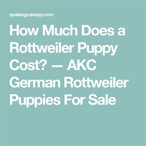 how much do rottweilers eat 1000 id 233 es sur le th 232 me rottweiler allemand sur chiots rottweiler