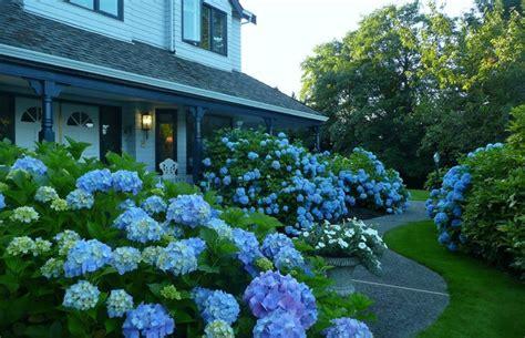 blue garden traditional landscape vancouver