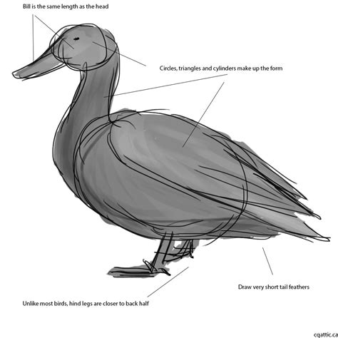 how to your for duck how to draw a duck in photoshop