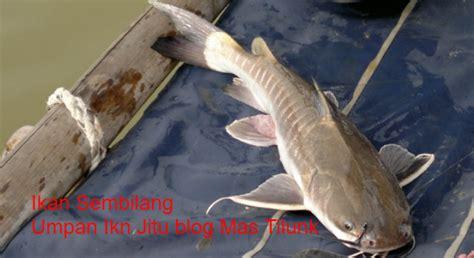 Berapa Harga Jam Tangan Merk Fossil jual umpan mancing sembilang welcome to www sumberharga