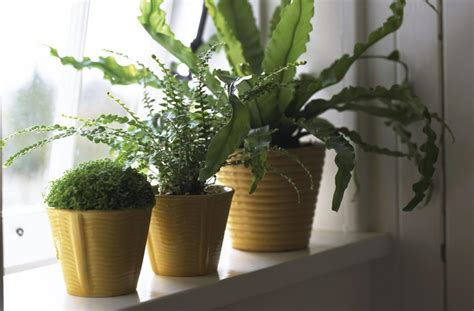 house plants no light understanding natural light for houseplants