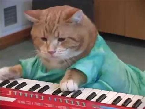 keyboard cat tutorial keyboard cat reincarnated youtube