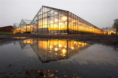 winter greenhouse lights   maximized  grow light