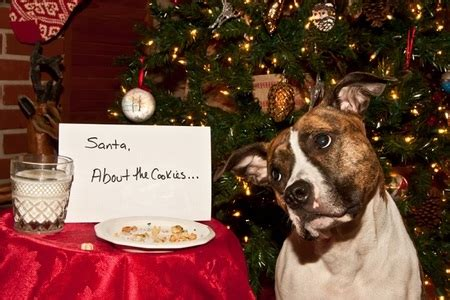 holiday food dos  donts  pets doityourselfcom