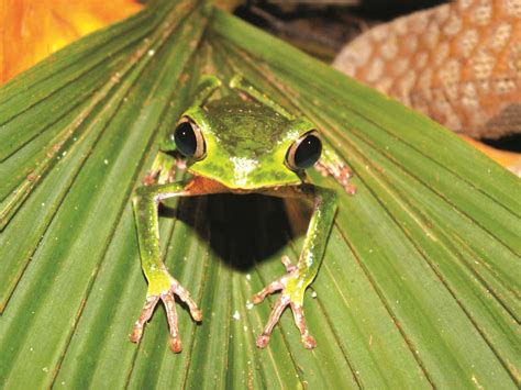 10 Facts About The Forest Floor by Top 10 Facts About The Rainforest The Inside