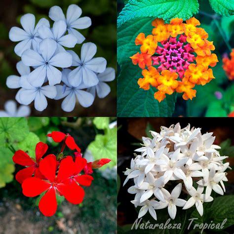 imagenes todo flores naturaleza tropical 191 quieres tu jard 237 n con flores