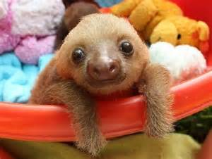 Ridiculously cute sloth photos earth in transition