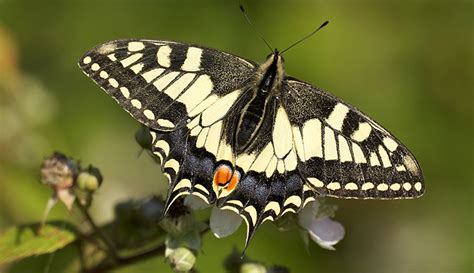 Patio Bushes How To Attract Butterflies To Your Garden Natural