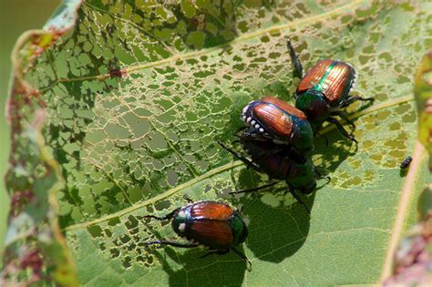 5 ways to eliminate garden pests without nasty chemical