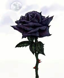 black roses images black rose hd wallpaper and background