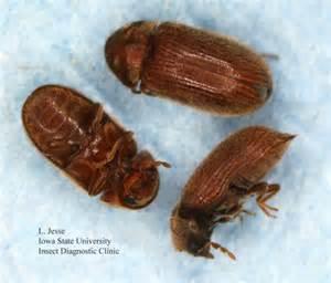 pantry pests emergency pest patrol llc