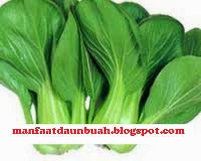 manfaat khasiat sawi hijau bagi kesehatan tubuh