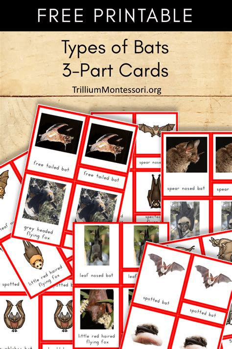 free printable montessori three part cards free printable types of bats 3 part cards trillium