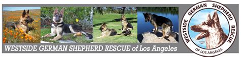 westside german shepherd rescue westside german shepherd rescue of los angeles