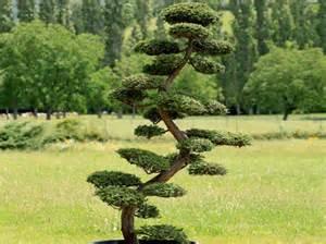 comment tailler ses arbres en nuage d 233 coration